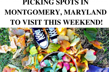 Fall's Here: Fun Apple Picking Spots in Montgomery, Maryland to visit this weekend!